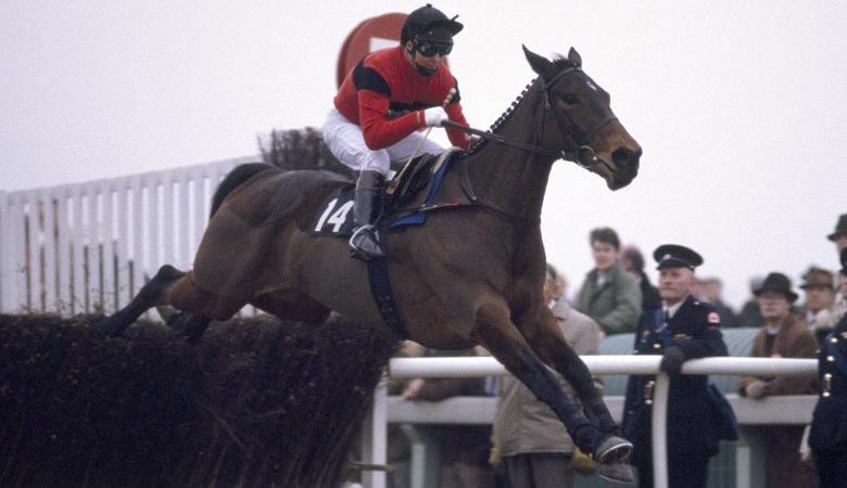 dawn run racehorse