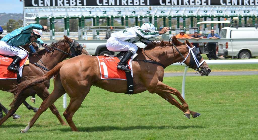 Winners horse betting best betting predictor
