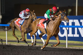 Animal Kingdom wins Dubai World Cup 2013