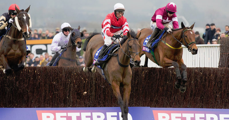 2016 cheltenham gold cup tips trends amp betting