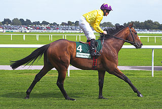 Sea the Stars racehorse