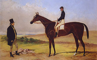 West Australian racehorse